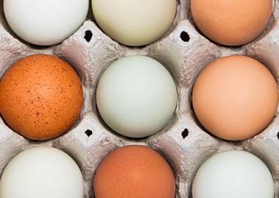 Egg-3