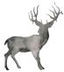 Skye Deer